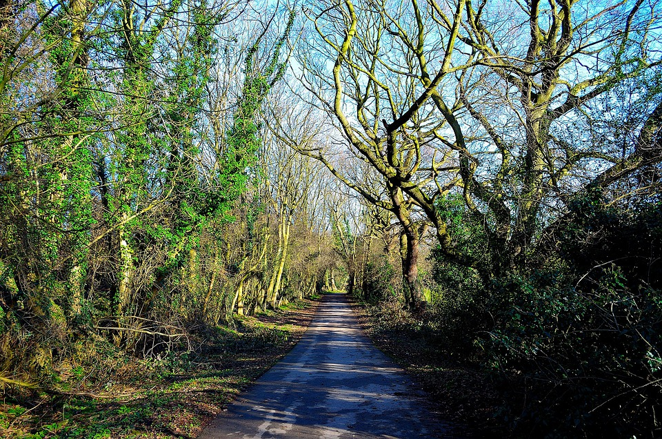Nature, Season, Relaxation, Tree, Trees, Autumn, Wood