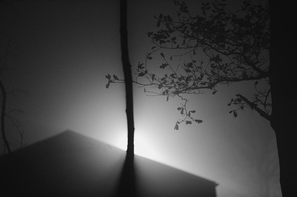 Light, Lens, Shadow, Silhouette, Wood, Branch