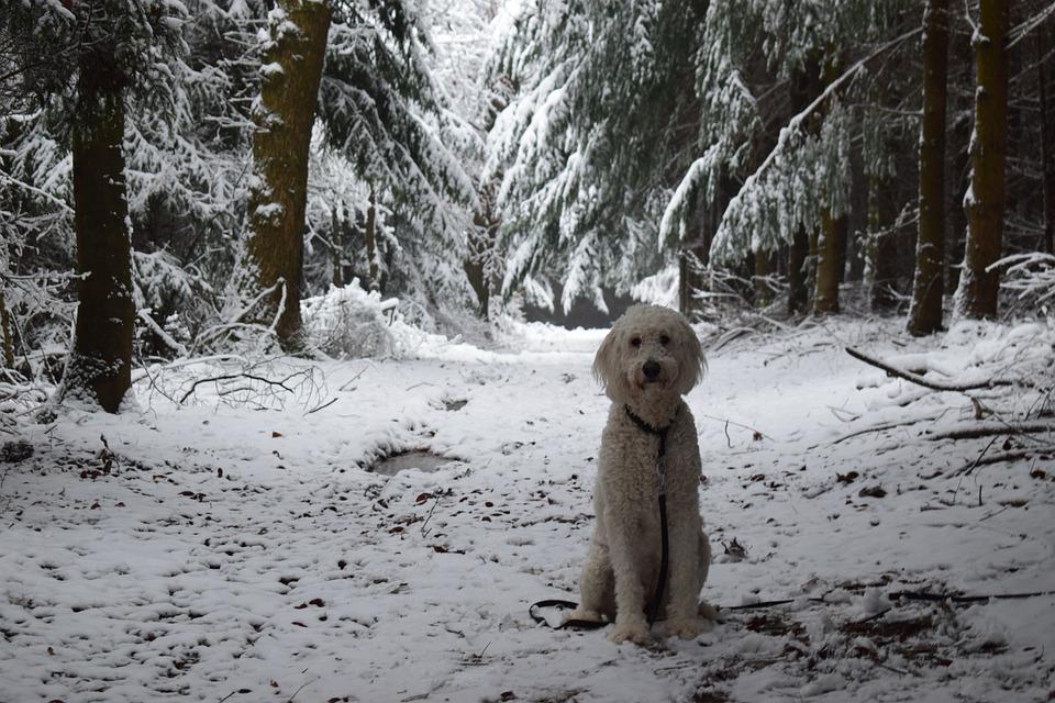 Tree, Winter, Wood, Nature, Dog, Snow