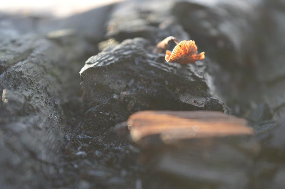 Wood, Sponge, Forest