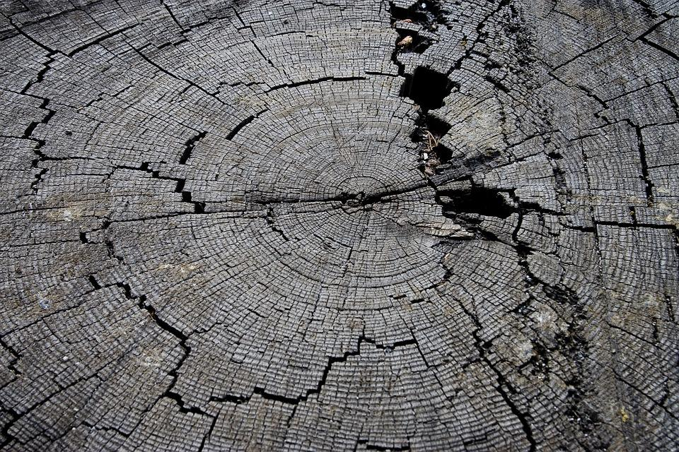 Tree Stump, Wood, Old, Nature, Texture, Timber, Rural