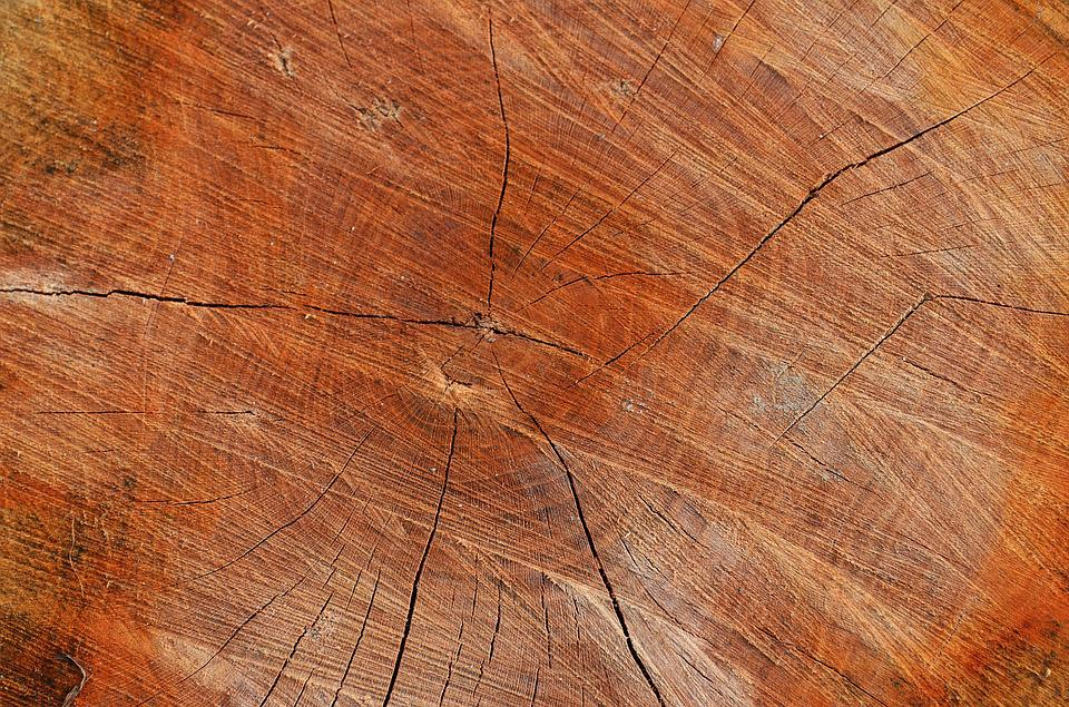Tree, Wood, Texture, The Background, Background, Board