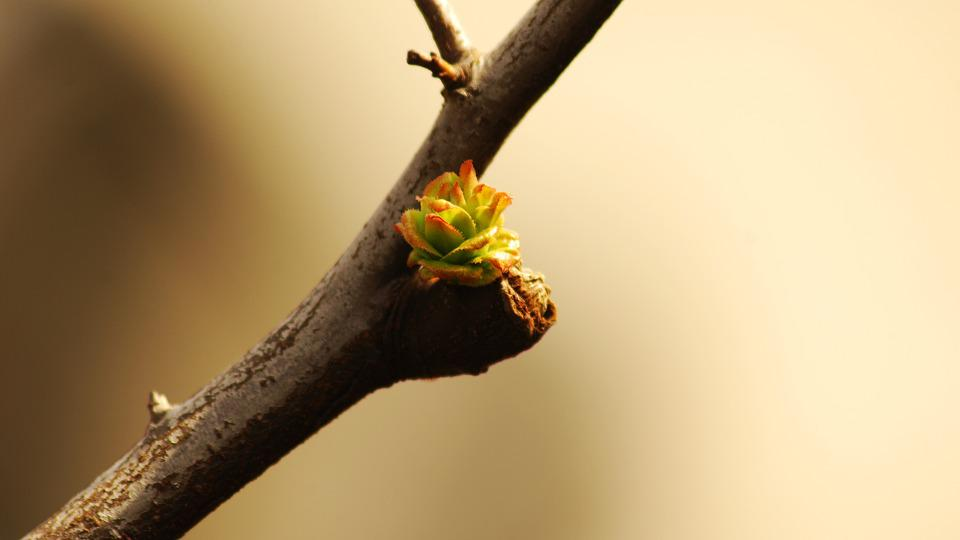 Wood, Nature, Leaf, This Type, Korea, New Leaf, Bud