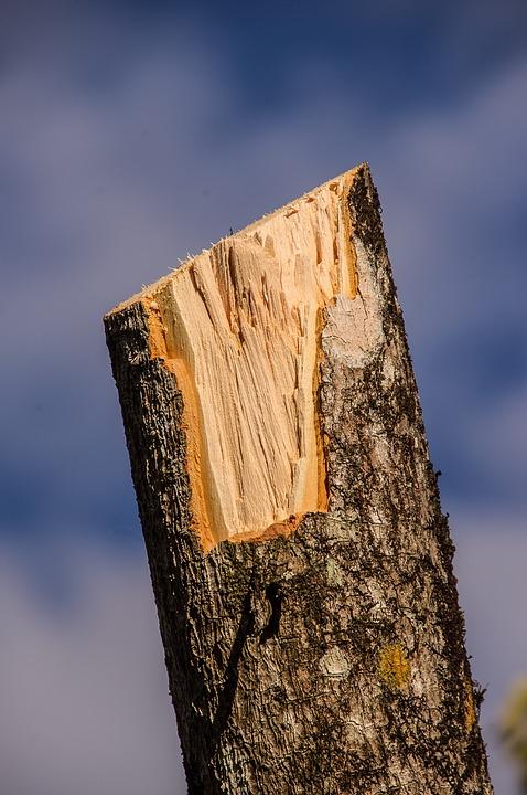 Wood, Branch, Sawn, Timber, Texture, Bark, Pruning, Cut