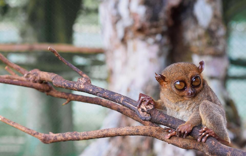 Wildlife, Nature, Tree, Animal, Wood, Mammal, Cute