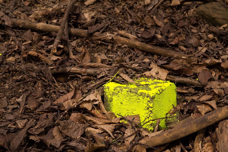 Nature, Wood, Leaf, Tree, Environment