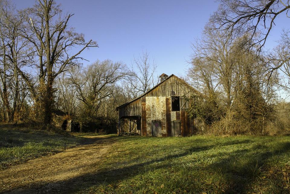 Tree, Wood, Barn, Landscape, Farm, Sunrise