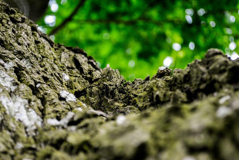 Forest, The Bark, Tree, Foliage, Wood