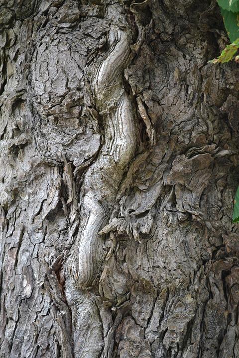 Tree Bark, Tree, Bark, Trunk, Wood