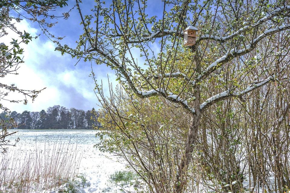 Tree, Nature, Landscape, Wood, Season, Snow, Wintry