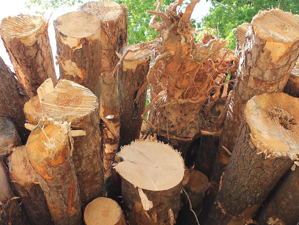 Timber, Lumber, Wood, Woodpile, Tree, Log, Cut, Stack