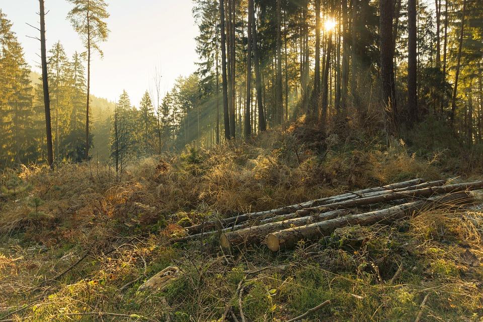 Forest, Nature, Trees, Wood, Autumn, Landscape, Sunbeam