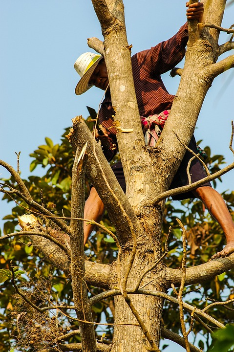 Man, Tree, Climb, Cases, Dangerous, Thai, Wood, Tribe