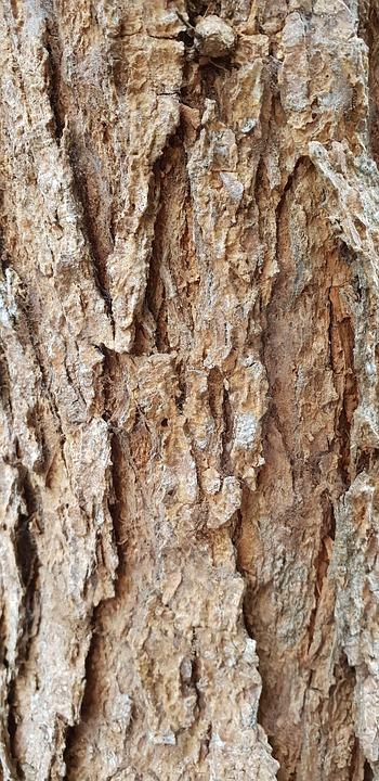 Wood, Bark, Trunk, Tree