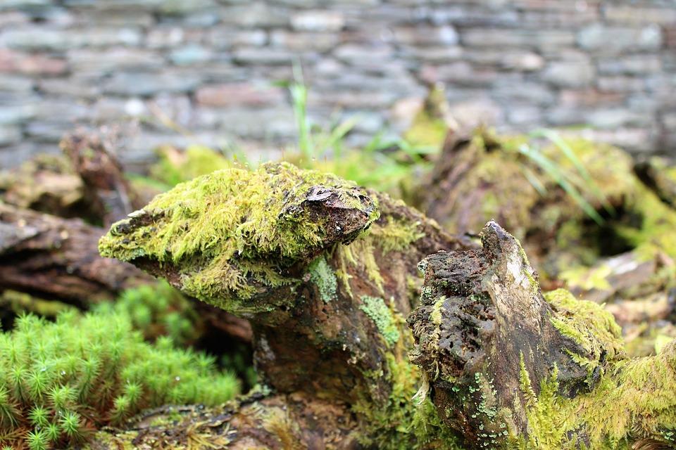 Stump, Bark, Wood, Moss, Lichen, Fern, Wall, Stone