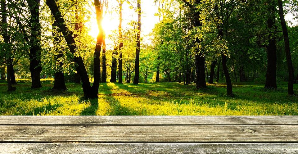 Background Wood Forest Presentation Wallpaper