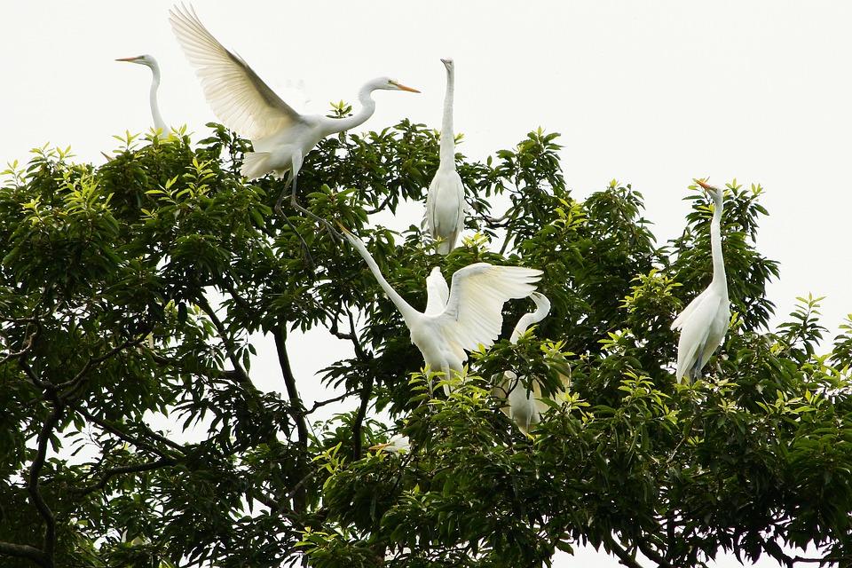 Animal, Wood, Wild Birds, Heron, Egret, Their Mother