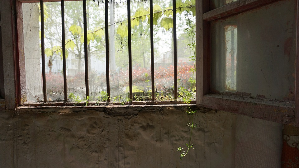 Window, Wood, Empty, Wall, The Old House, Green Plants