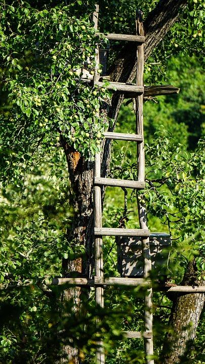 Wood-fibre Boards, Nature, Leaves, Wood, Tree, Plant