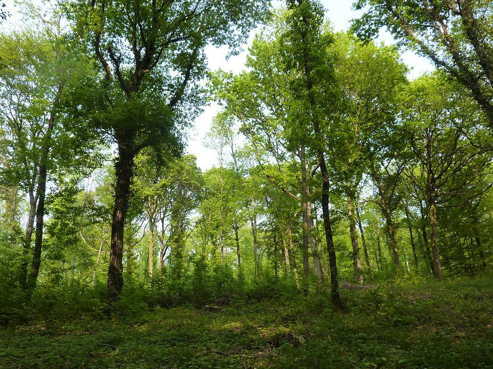 Wooded Landscape, Wood, Under Wood, Forest, Trees