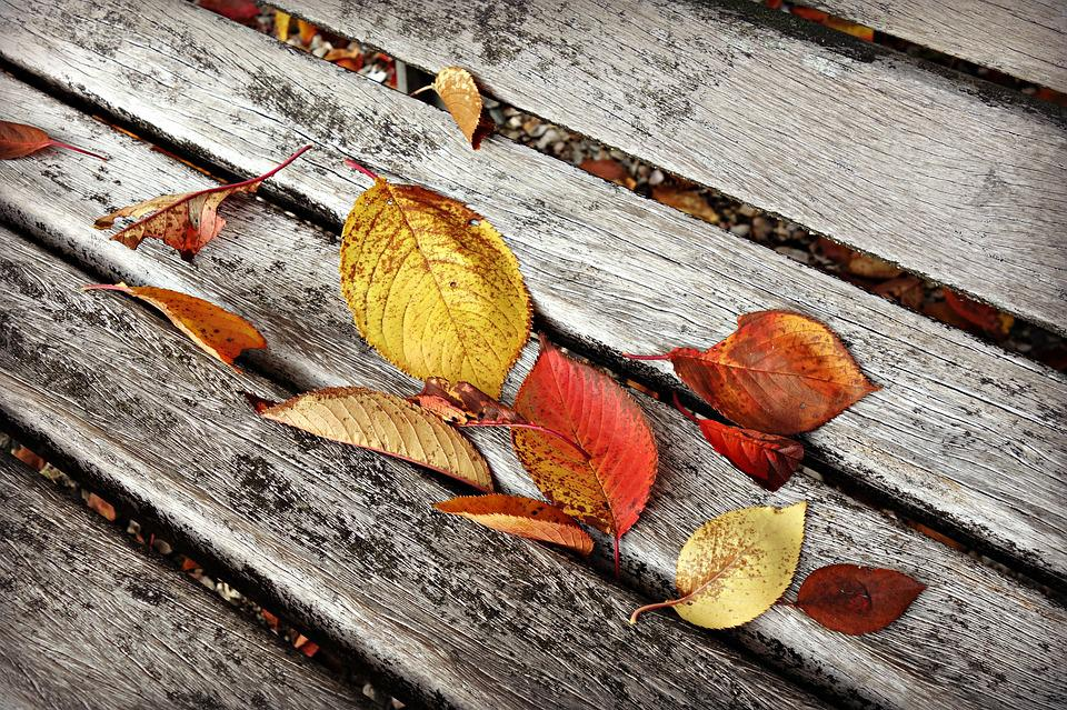 Autumn Leaf, Fallen Leaves, Fall, Wooden Bench