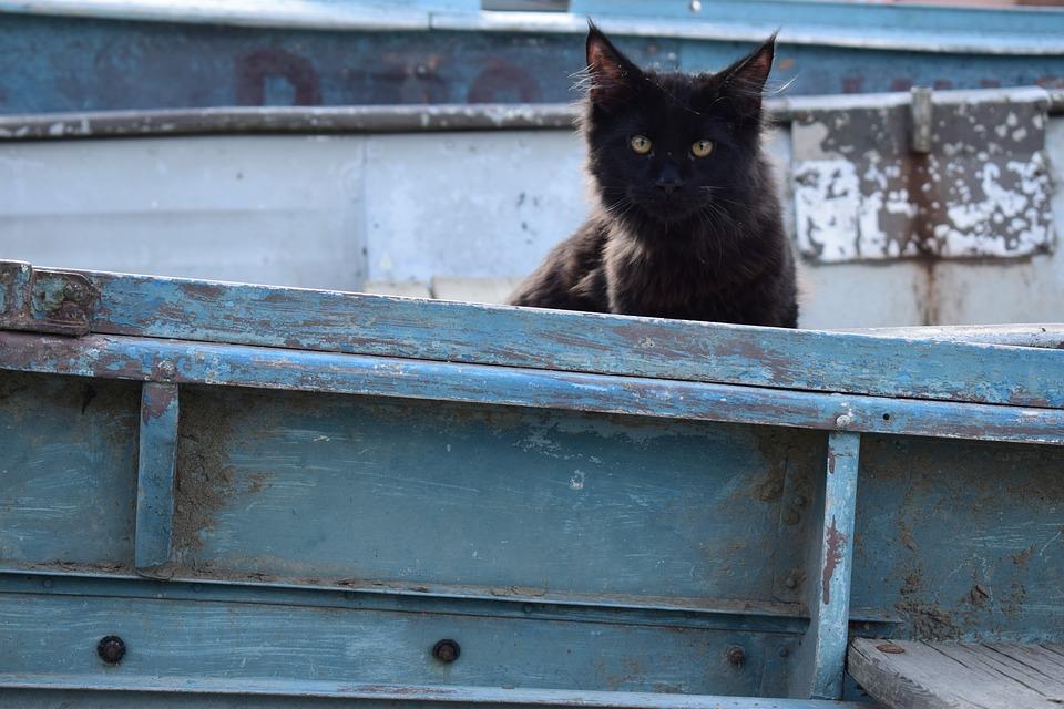 Kitty, Cat, Black Cat, Wooden Boat, Pet, Kitten, Feline