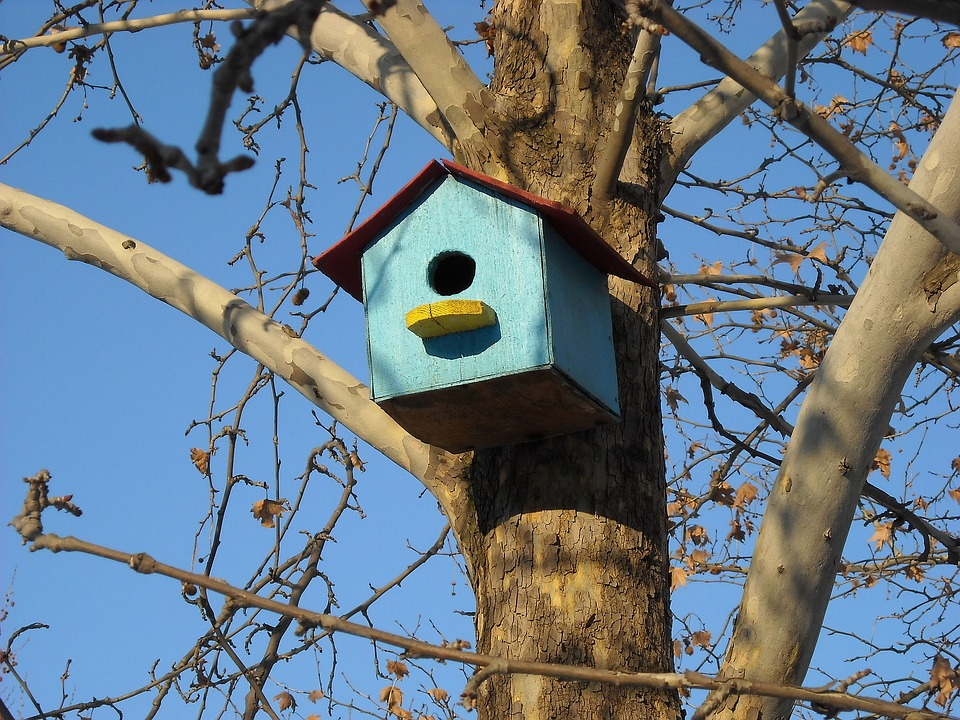 Admirable Free Photo Wooden House Wood Bird Bird House Tree House Download Free Architecture Designs Scobabritishbridgeorg