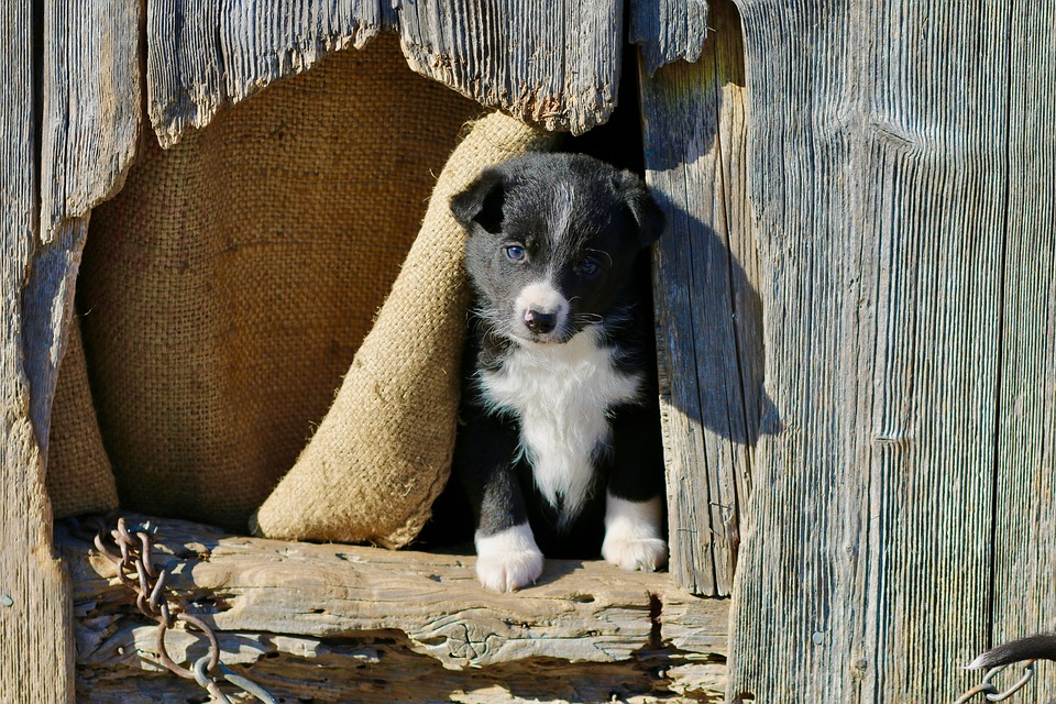 Puppy, Wooden Houses, Mixrasse, Young, Outlook