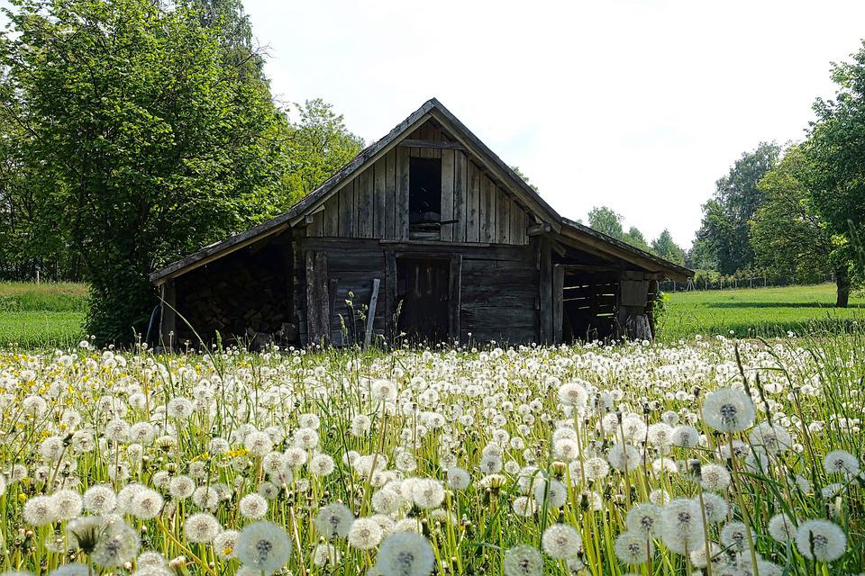 Shed, Countryside, Farm, Wildflowers, Wooden, Nature