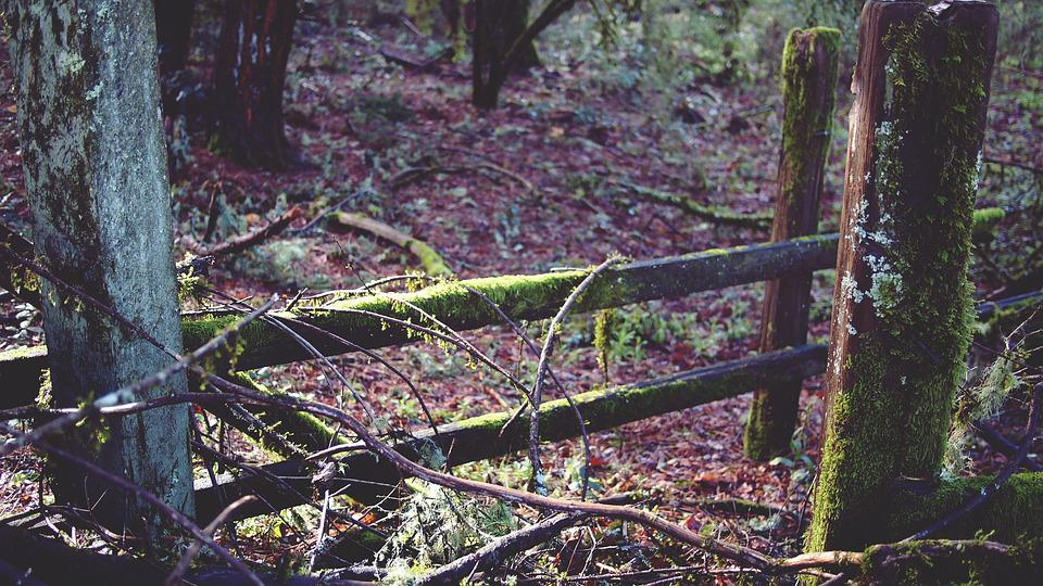 Forest, Fence, Wooden, Wood, Tree, Nature, Green