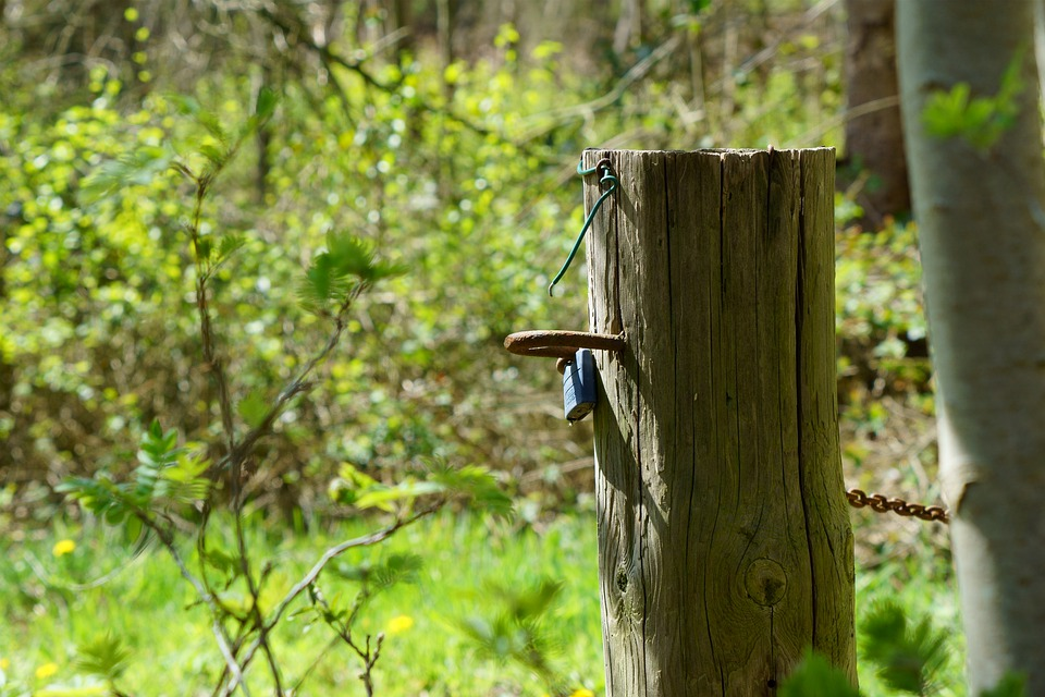 Pile, Forest, Nature, Landscape, Wood, Wooden Posts