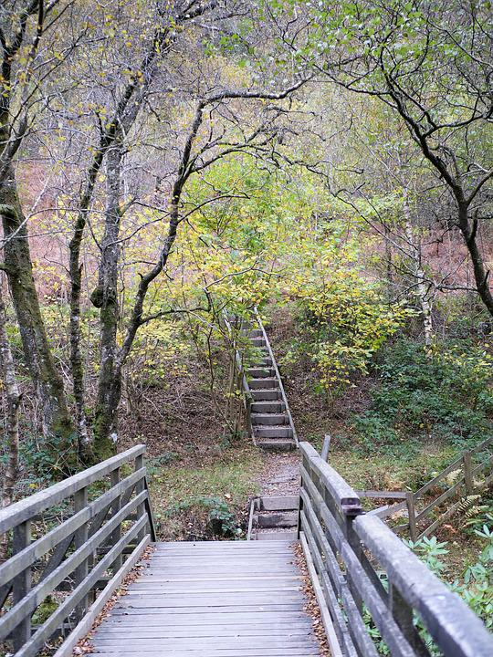 Wooden Steps, Wood, Steps, Staircase, Outdoors, Stairs