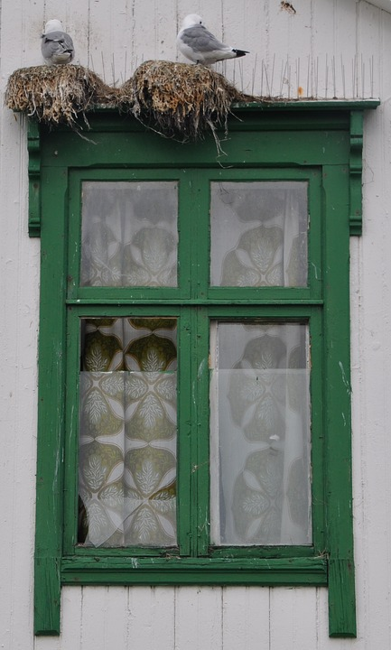 Window, Gulls, Wooden Windows, Old Window, Architecture