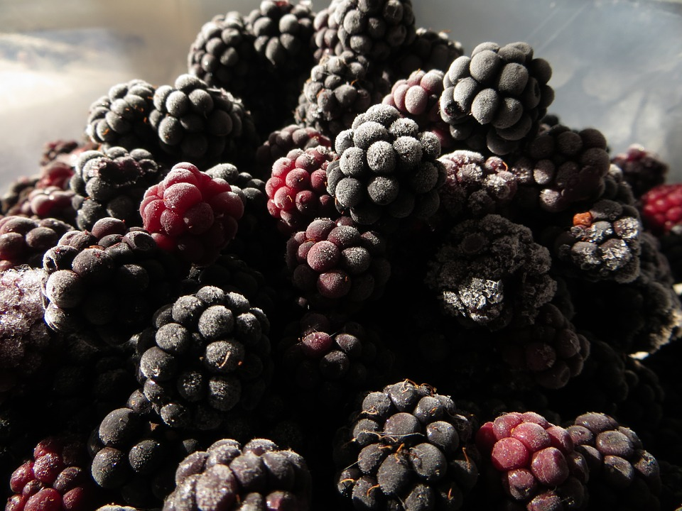 Blackberry, Autumn, Woodland, Food, Nature, Seasonal