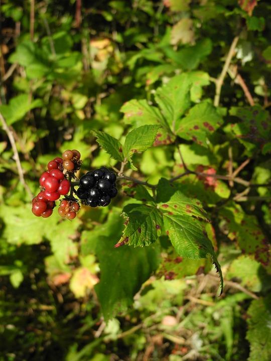 Woodland Plant, Non Edible, Nature, Macro