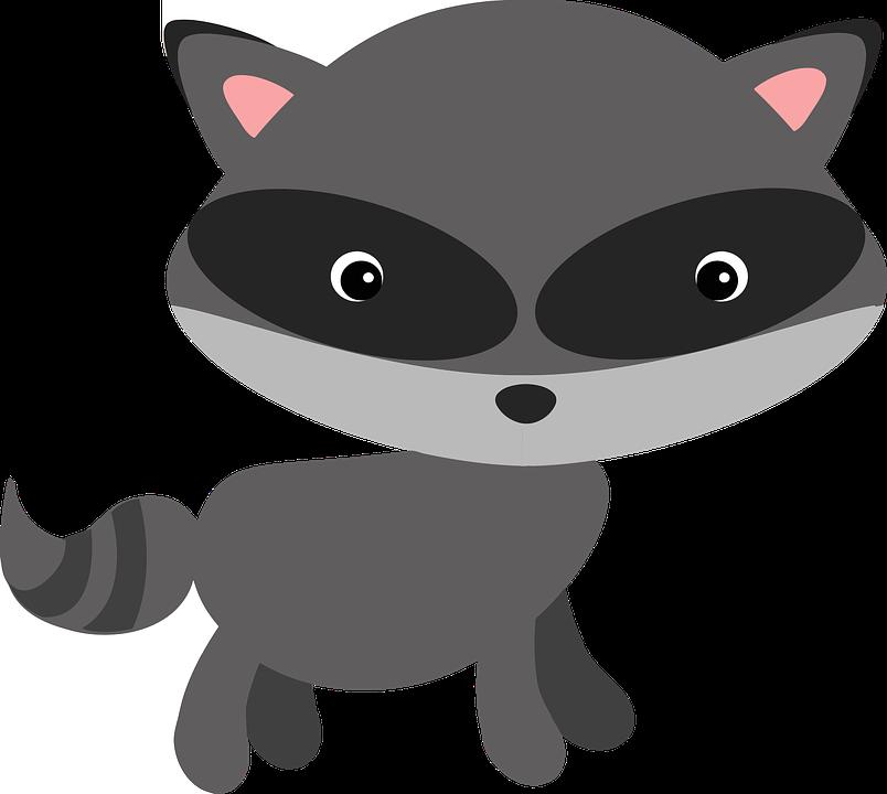 Raccoon, Woodland, Animal, Masked, Adorable