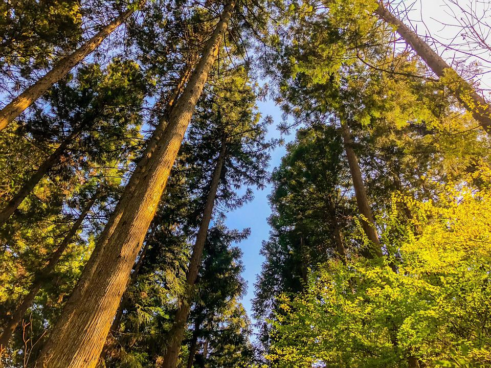 Wood, Woods, Mountain, Natural, Arboretum, Forest