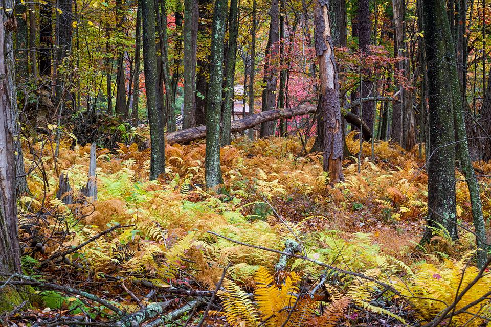 Woods, Fall Foliage, Autumn, Nature, Forest Landscape