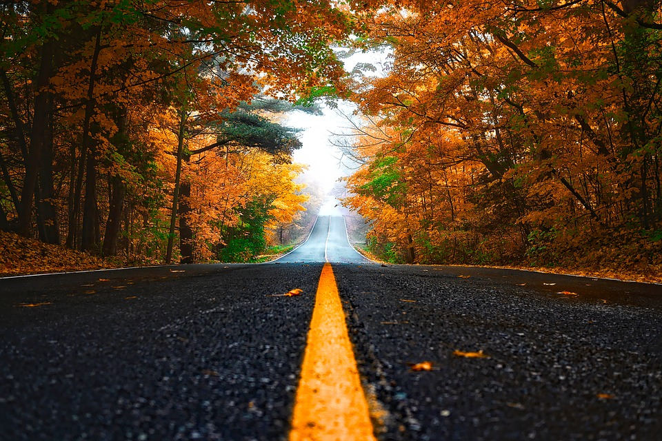 Autumn, Fall, Forest, Trees, Woods, Road, Drive