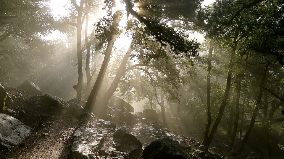 Trees, Rocks, Sunlight, Forest, Nature, Woods, Outdoors