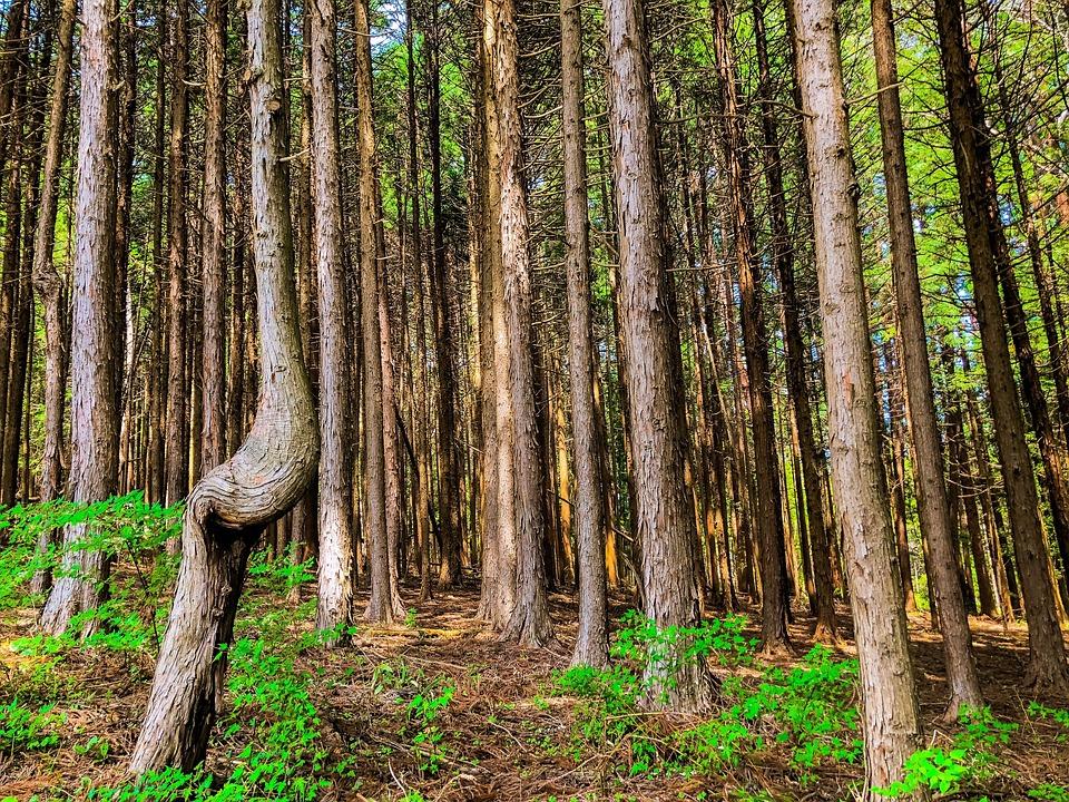 Woods, Wood, Natural, Arboretum, Forest, Landscape