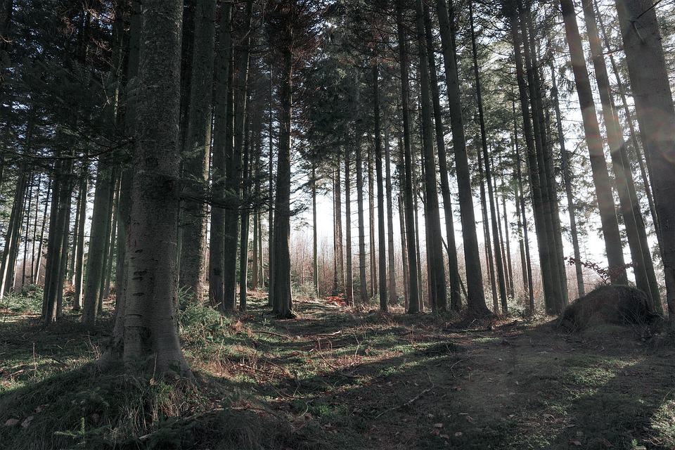 Forest, Trees, Path, Trail, Woods, Landscape, Nature