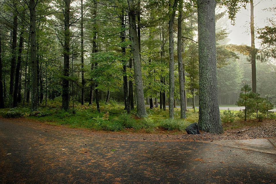 Forest, Woods, Sunny, Sunshine, Nature, Landscape