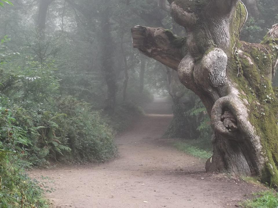 Misty, Fog, Path, Tree, Forest, Scenery, Woods, Eerie