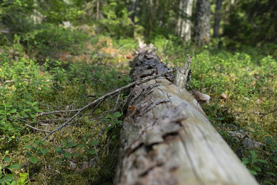 Wood, Log, Wilderness, Timber, Texture, Wooden, Woods