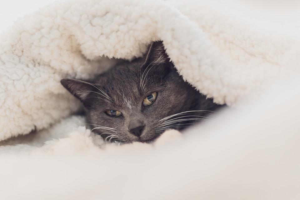 Cat, Eyes, Close Up, Grey, Wool, Blanket, Cosy, Cute