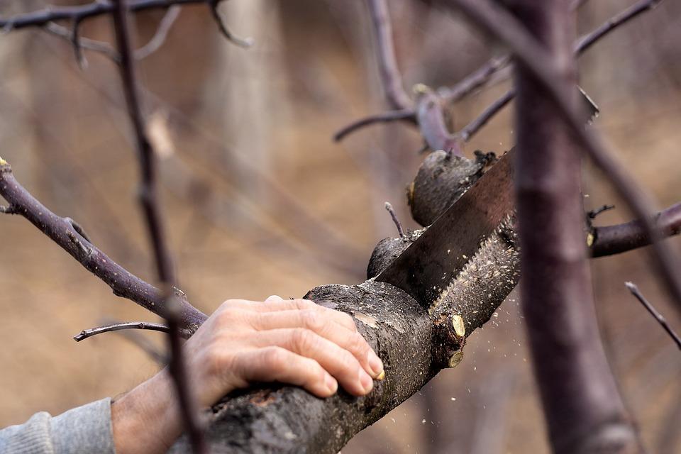 Cutting, Saw, Tree, Tool, Work, Blade, Registrar