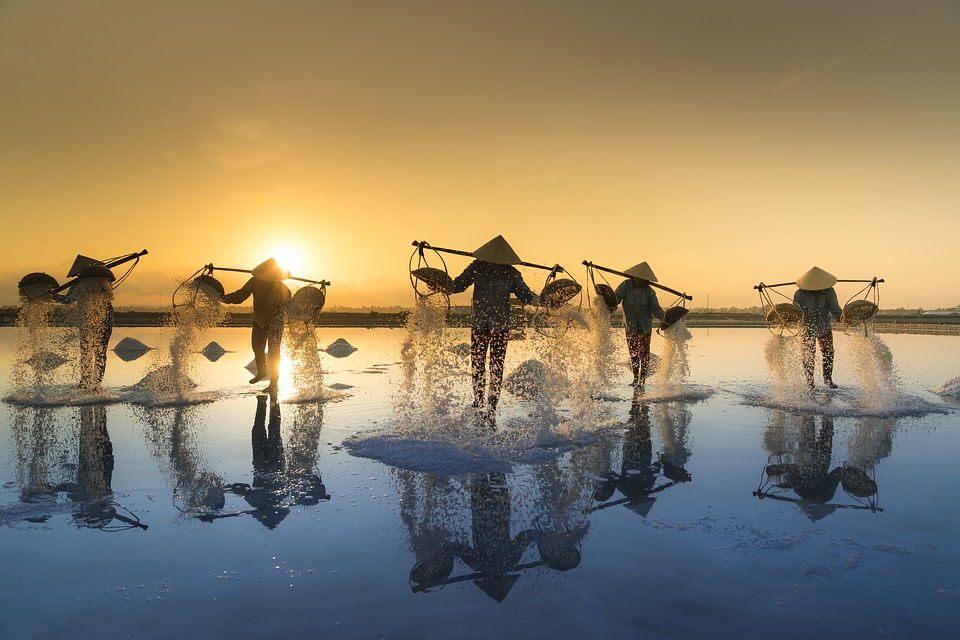 Salt Harvesting, Vietnam, Water, Salt, Work, People