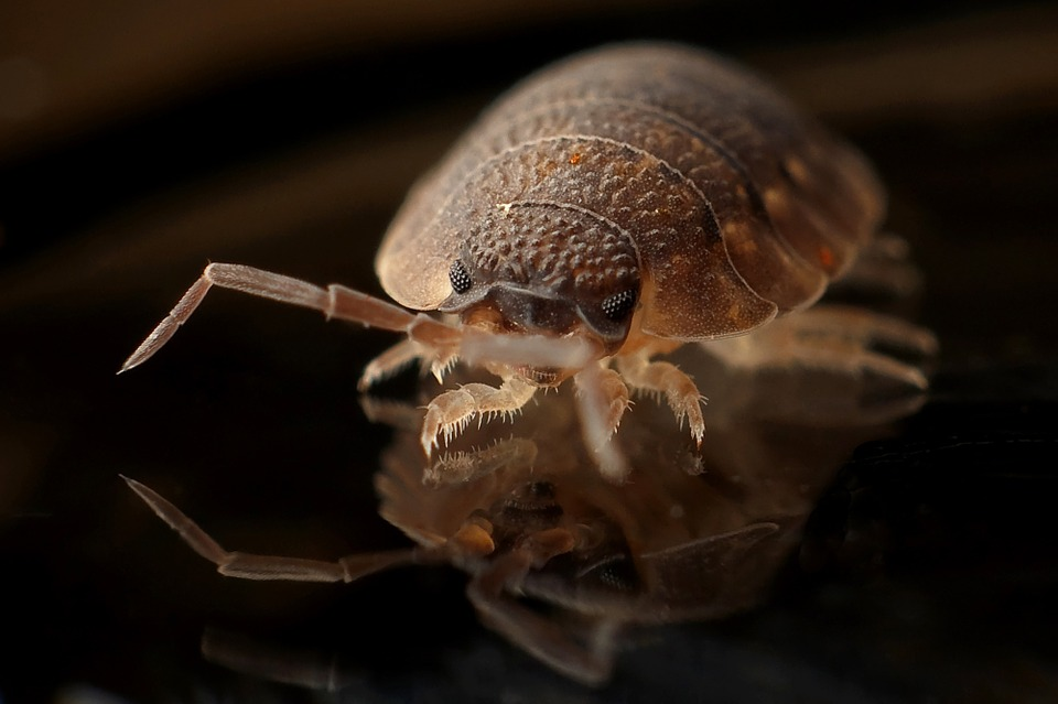 Armadillo, Worm, Bug, Insect
