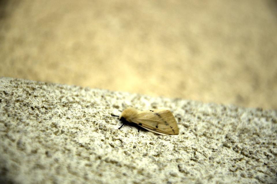 A Moth, Insect, Insect Night, Worm, Butterfly, Hairy